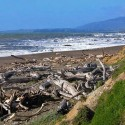 ocean beach with driftwood