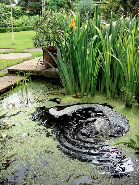 outdoor fountain and small pond for unique garden designs and attractive backyard landscaping ideas