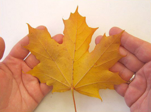 fall crafts with maple leaves and centerpiece ideas