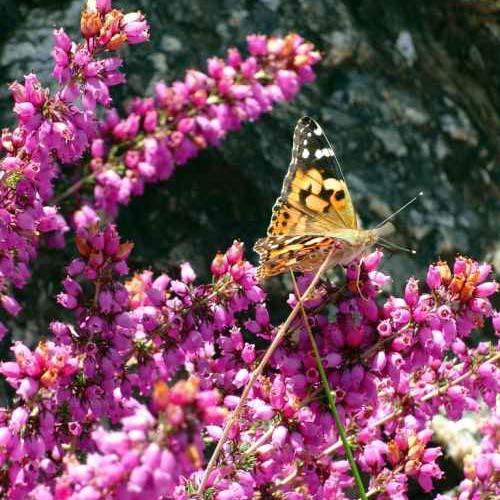 purple heather flower arrangement designs with butterflies
