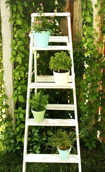 ladder with small plants for backyard decorating