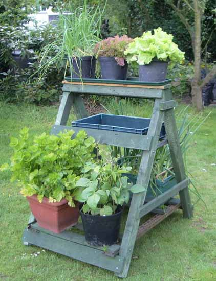 small wooden ladder with green plants for beautiful backyard decoration