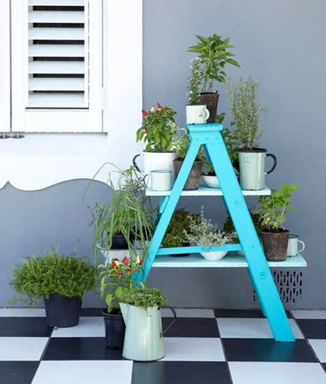 blue ladder with shelves for plants