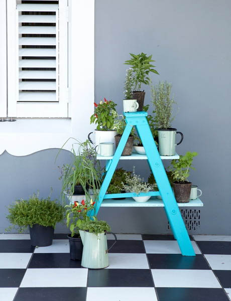 blue ladder with plants for room decorating