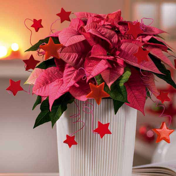 Christmas table decorations flowers images New flower decoration