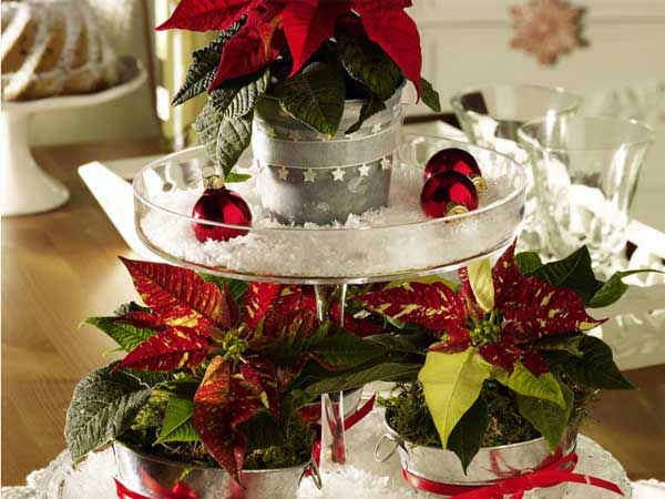 poinsettia christmas centerpieces
