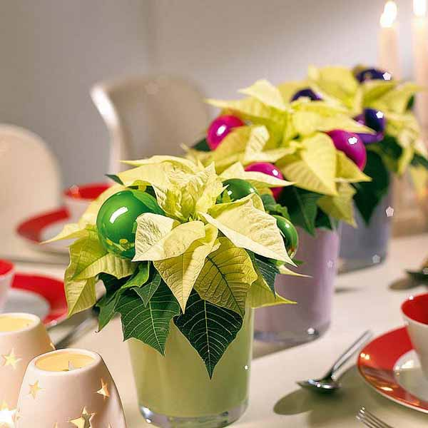 green poinsettia table centerpieces
