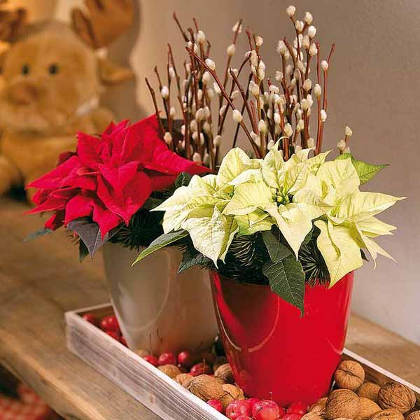 poinsettia table centerpieces
