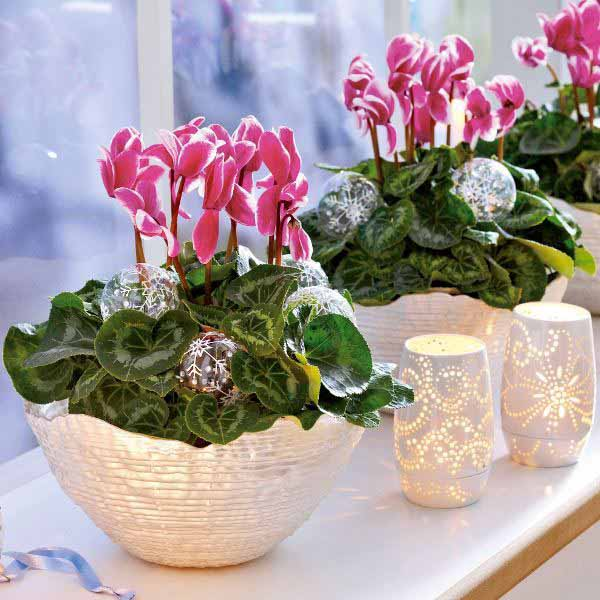 cyclamen table centerpieces