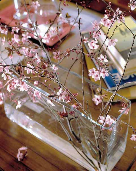 spring branches in glass jar