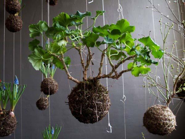 String Garden Decorations Vertical Gardens And Backyard Ideas