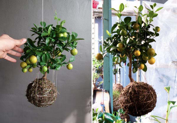 String Garden Decorations Vertical Gardens And Backyard Ideas