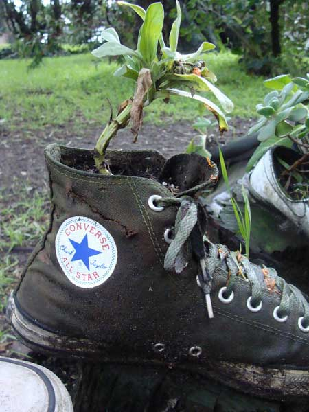 black boot with plants
