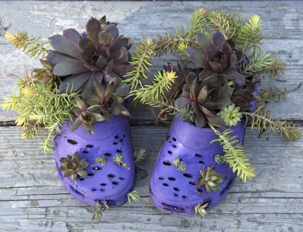 small plants growing in plastic shoes