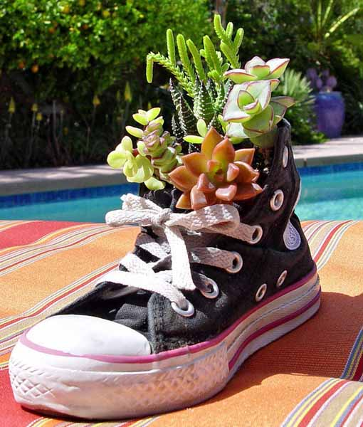 growing plants in sport shoes