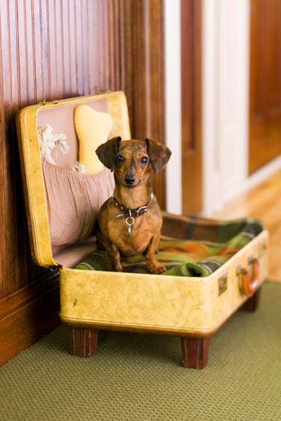 pet bed made of old suitcase