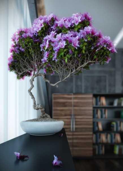 Calming Bonsai Plants Adding Asian Flavor To Modern