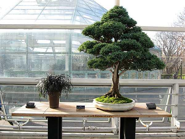 Calming bonsai plants adding asian flavor to modern - Calming zen house design bringing japanese style into singaporean home ...