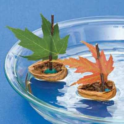 maple leaves and nut shells for making floating table centerpiece