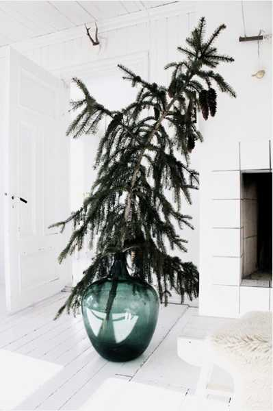 large glass vase with live christmas tree