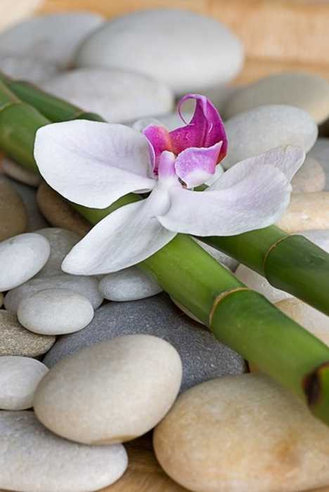 green bamboo sticks and orchid flower on beach pebbles