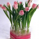 tulip flower arrangement