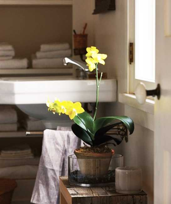 yellow flower for white bathroom decorating