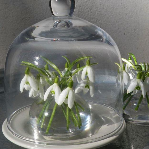 snowdrops spring flowers
